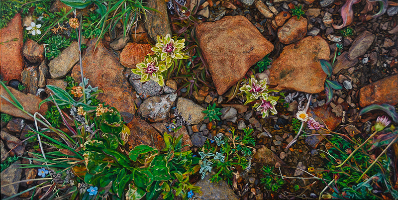 Rocky Ground with Yellow-Pink Paintbrush and Forget-me-nots